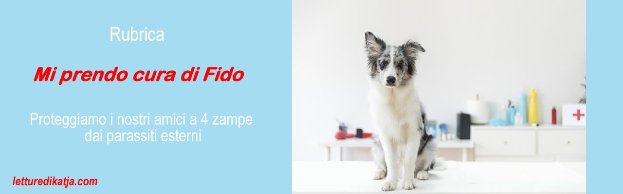 Rubrica: Mi prendo cura di Fido Come proteggere i nostri amici a 4 zampe: Zecca letturedikatja.com